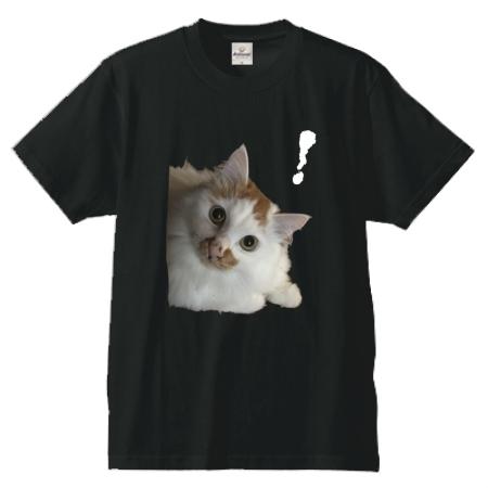 猫写真のオリジナルTシャツ