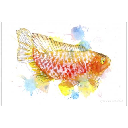 鯉のイラストが躍動的なポストカード